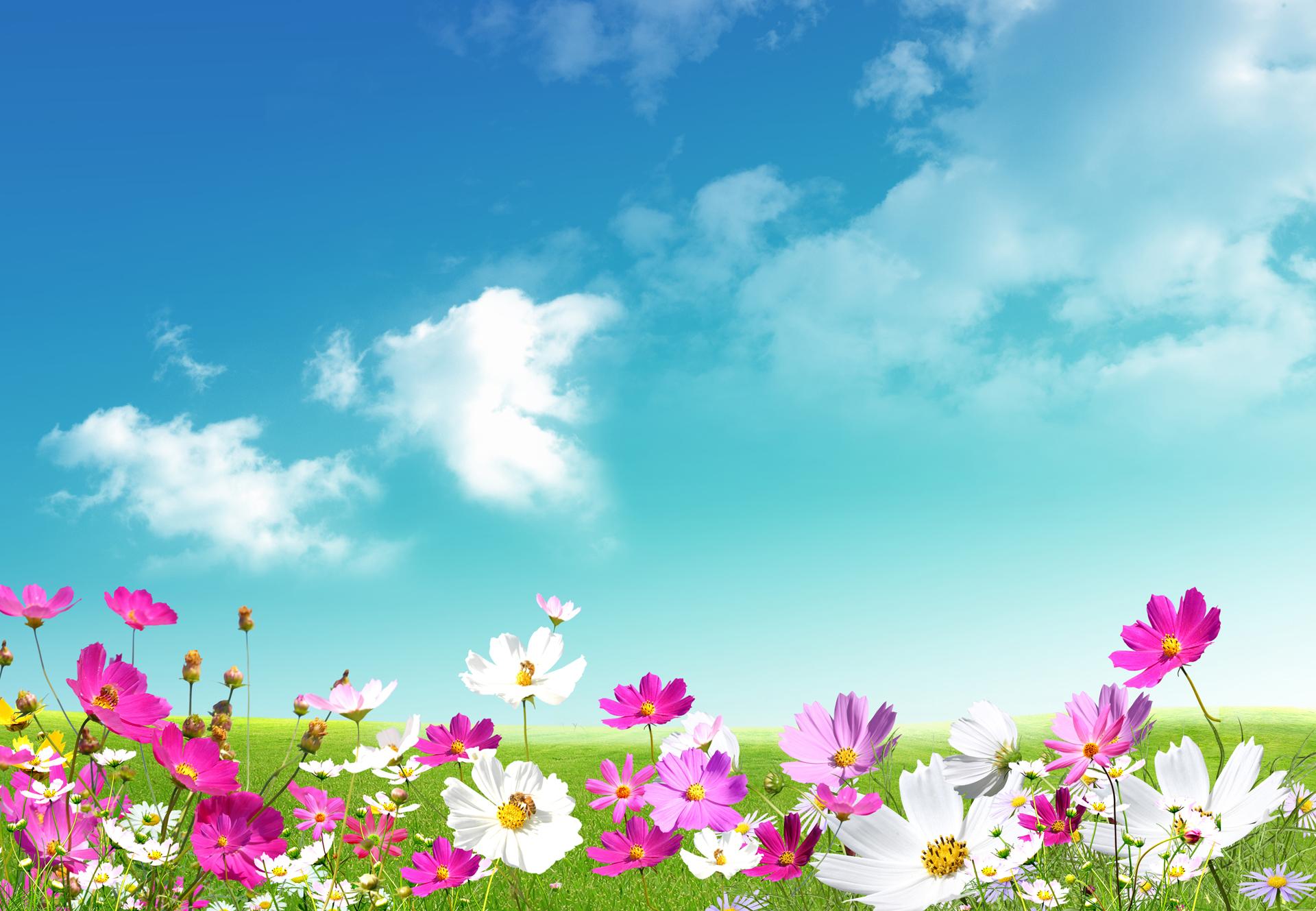 free-spring-desktop-wallpaper-w051mntr